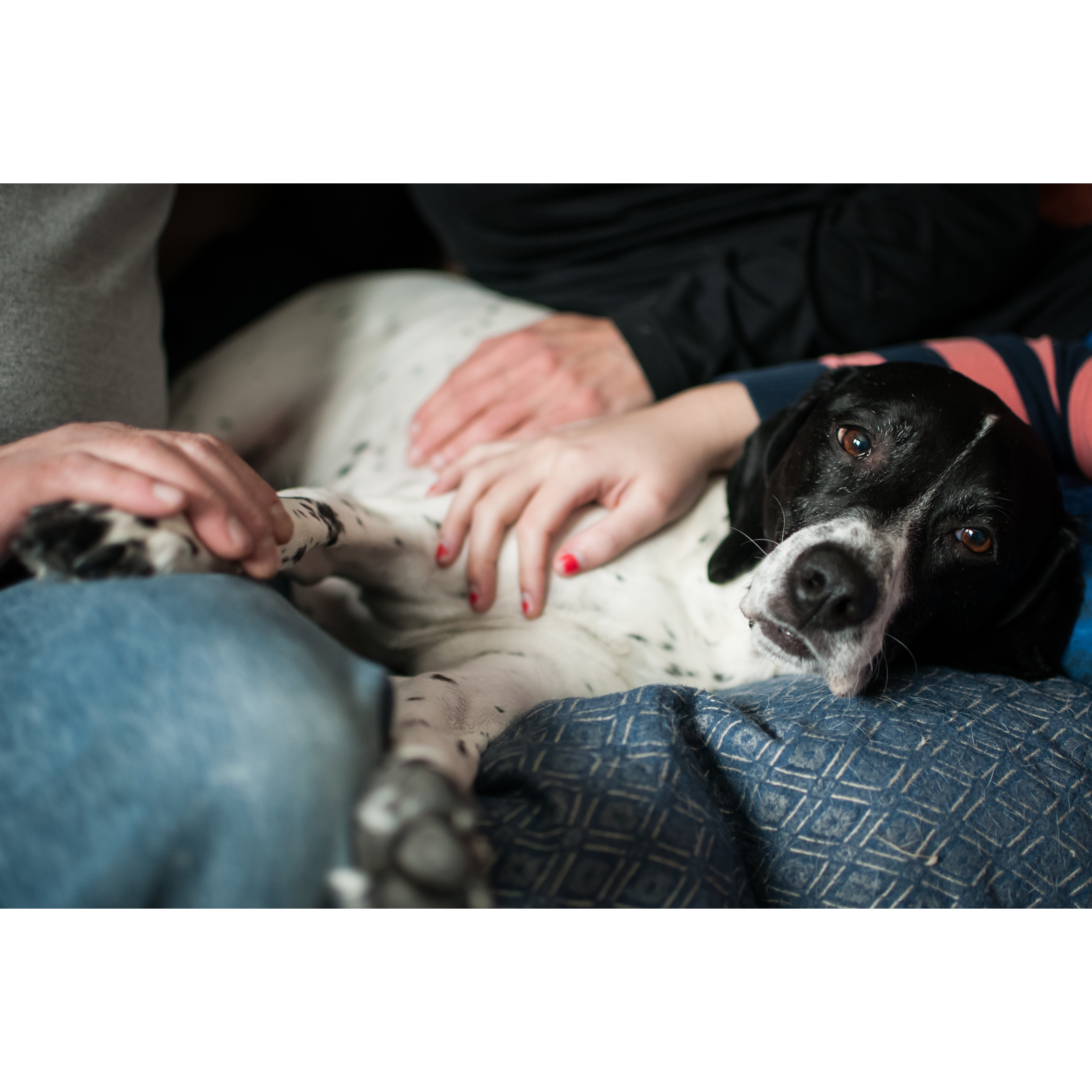 Creature Comforts Mobile Veterinary Service