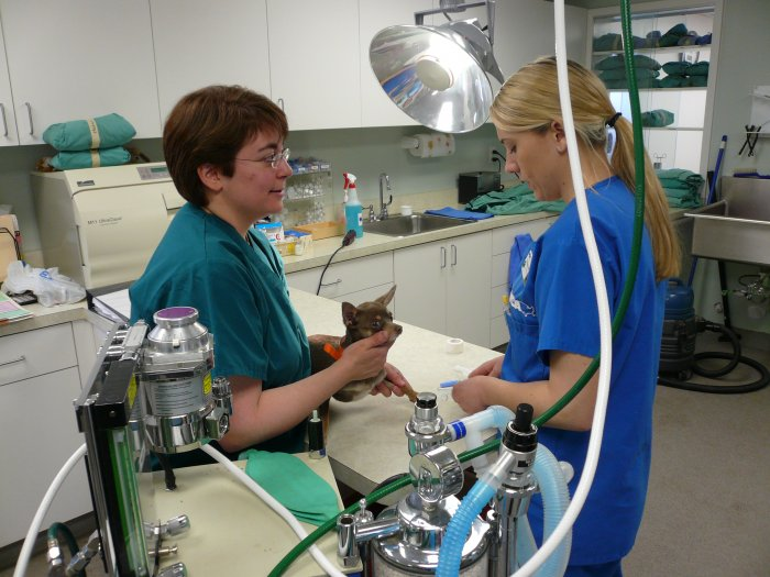 VCA Neshaminy Animal Hospital image 4