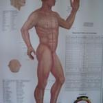 Acupunctuur Praktijk Grave en Dry Needling J F Lomans