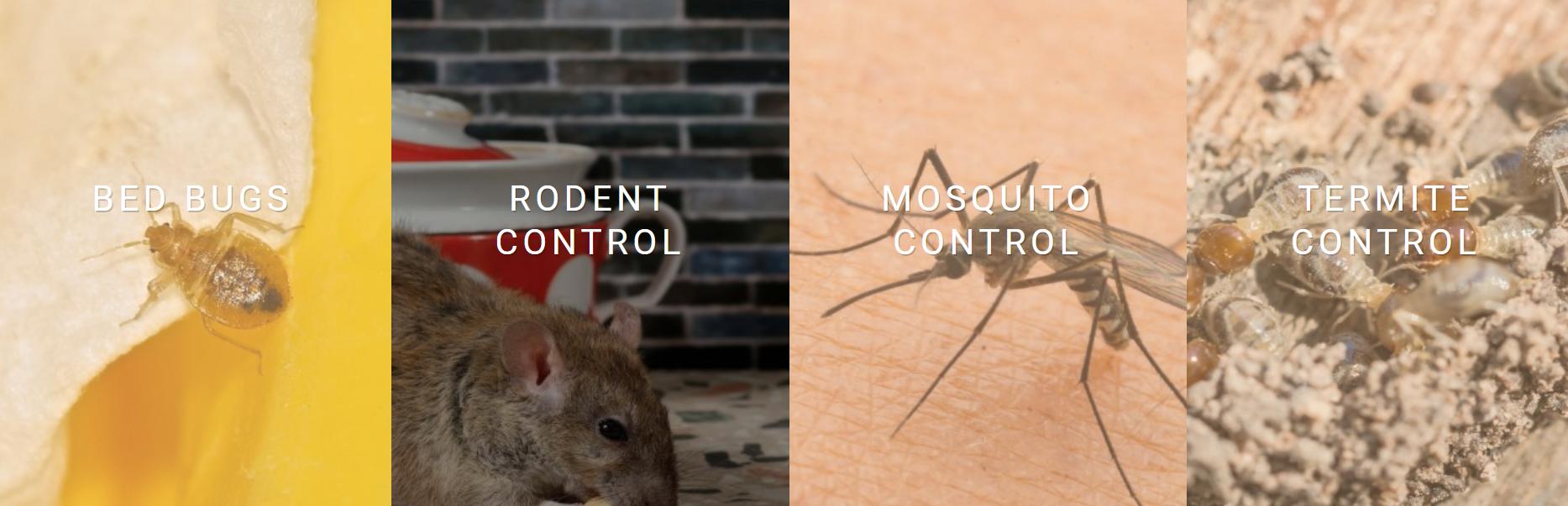 Direct'em Pest Solutions image 0
