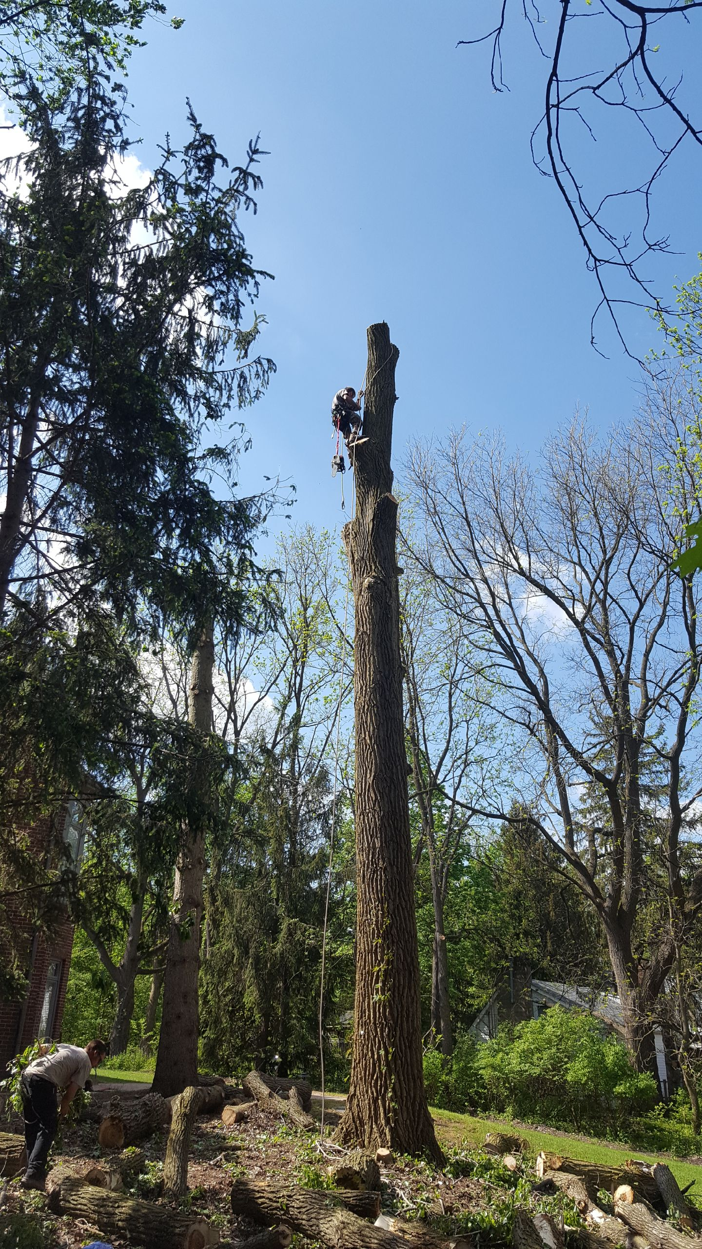 Coffman's Tree Service image 19
