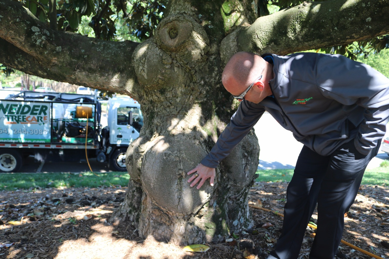 Schneider Tree Care image 7