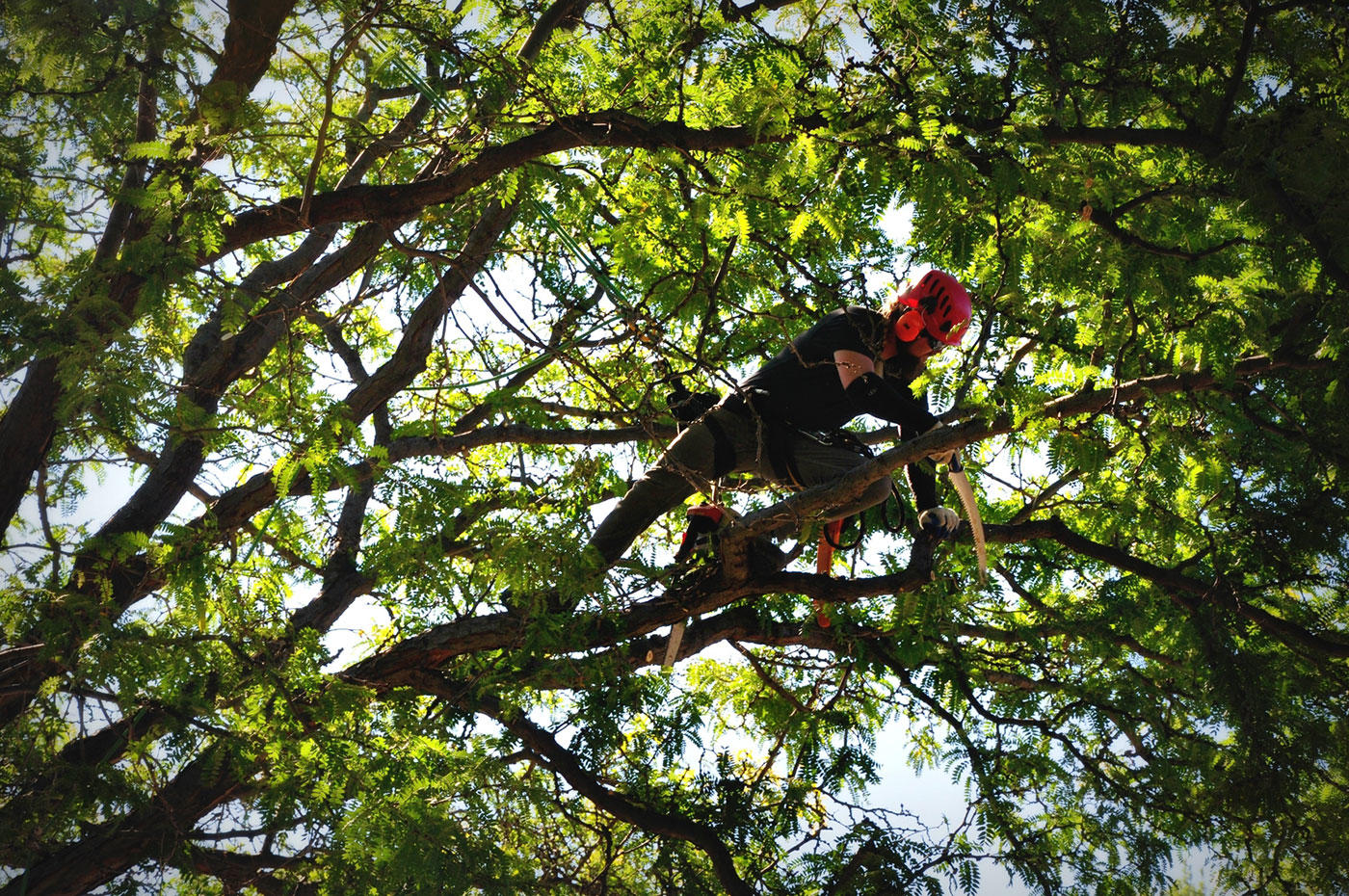 Arbor Expertise image 2