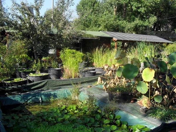 Azienda agricola michelazzi vivai piante articoli da for Arredatori di giardini