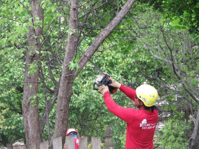 Rivas Tree Service image 0