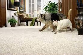 Steve's Carpet Cleaning image 2