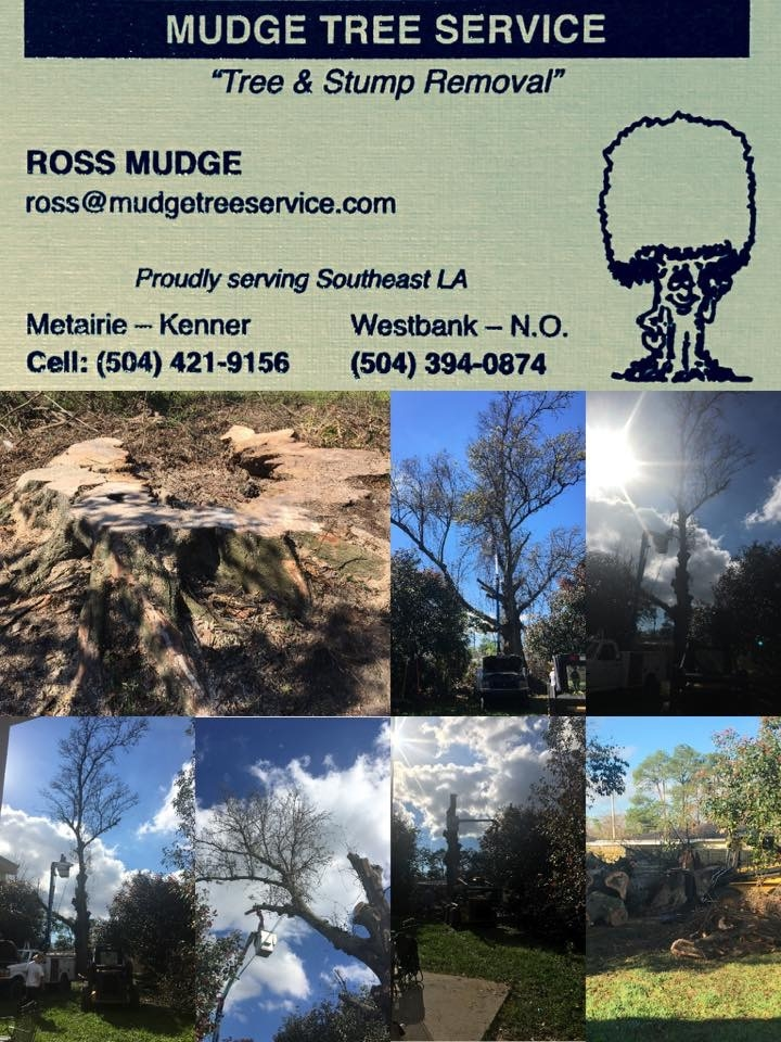 Mudge Tree Service image 2
