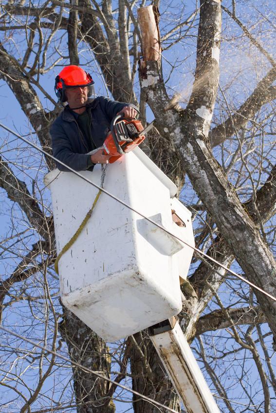 ROSS TREE SERVICE LLC image 2