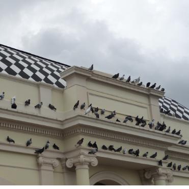BIRDXPERT.com
