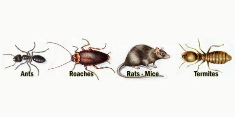 Guarantee Pest Control, Inc. image 0