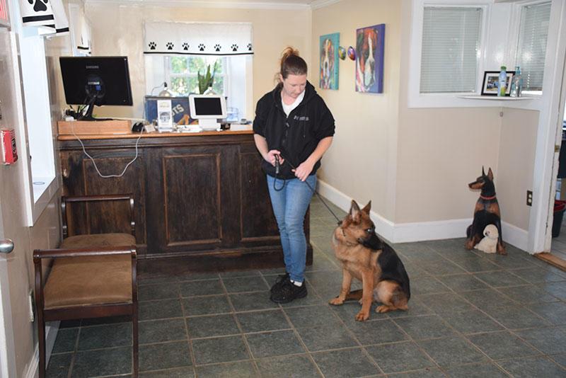 New England Canine image 11
