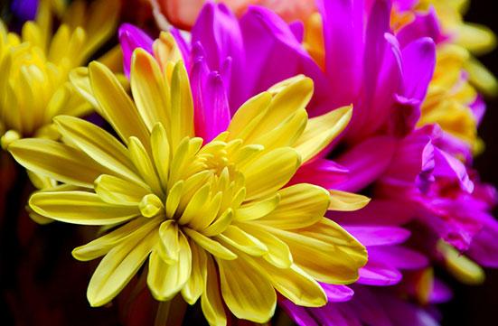 Earle's Loveland Floral & Gifts image 0