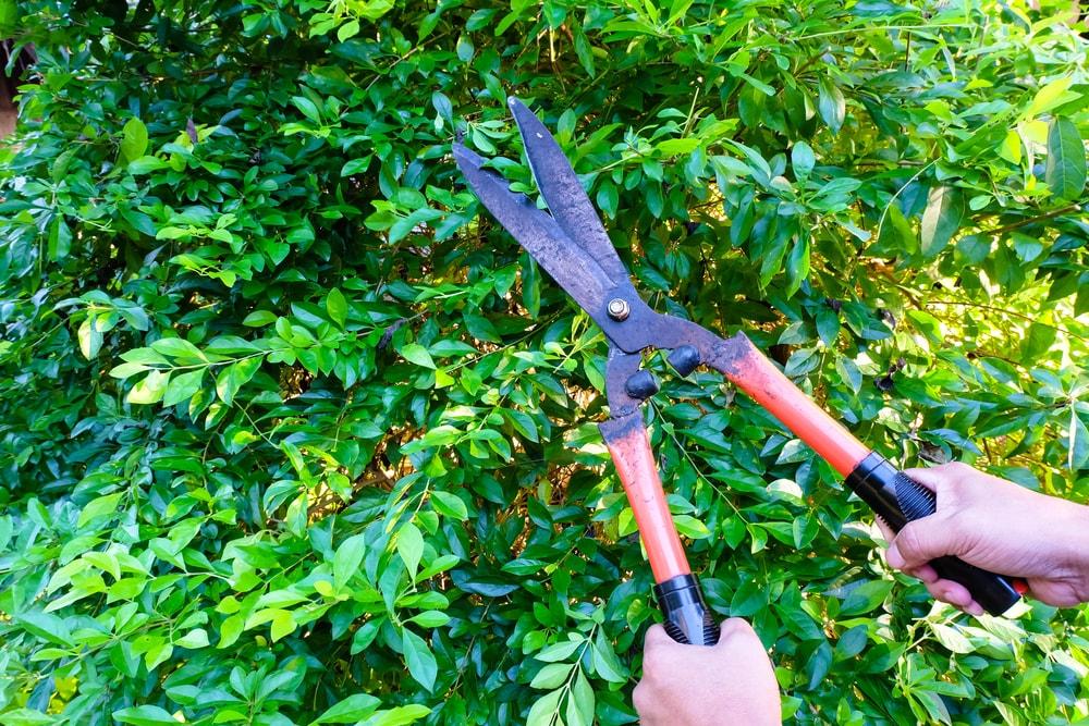 Arbor Expertise image 0