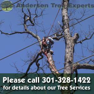 Andersen Tree Experts image 0