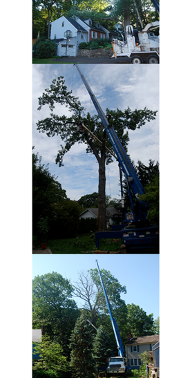 Amoroso Tree Service Inc image 0