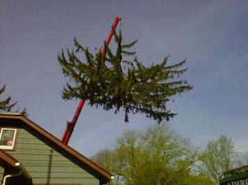 Adirondack Tree Specialists Inc image 0