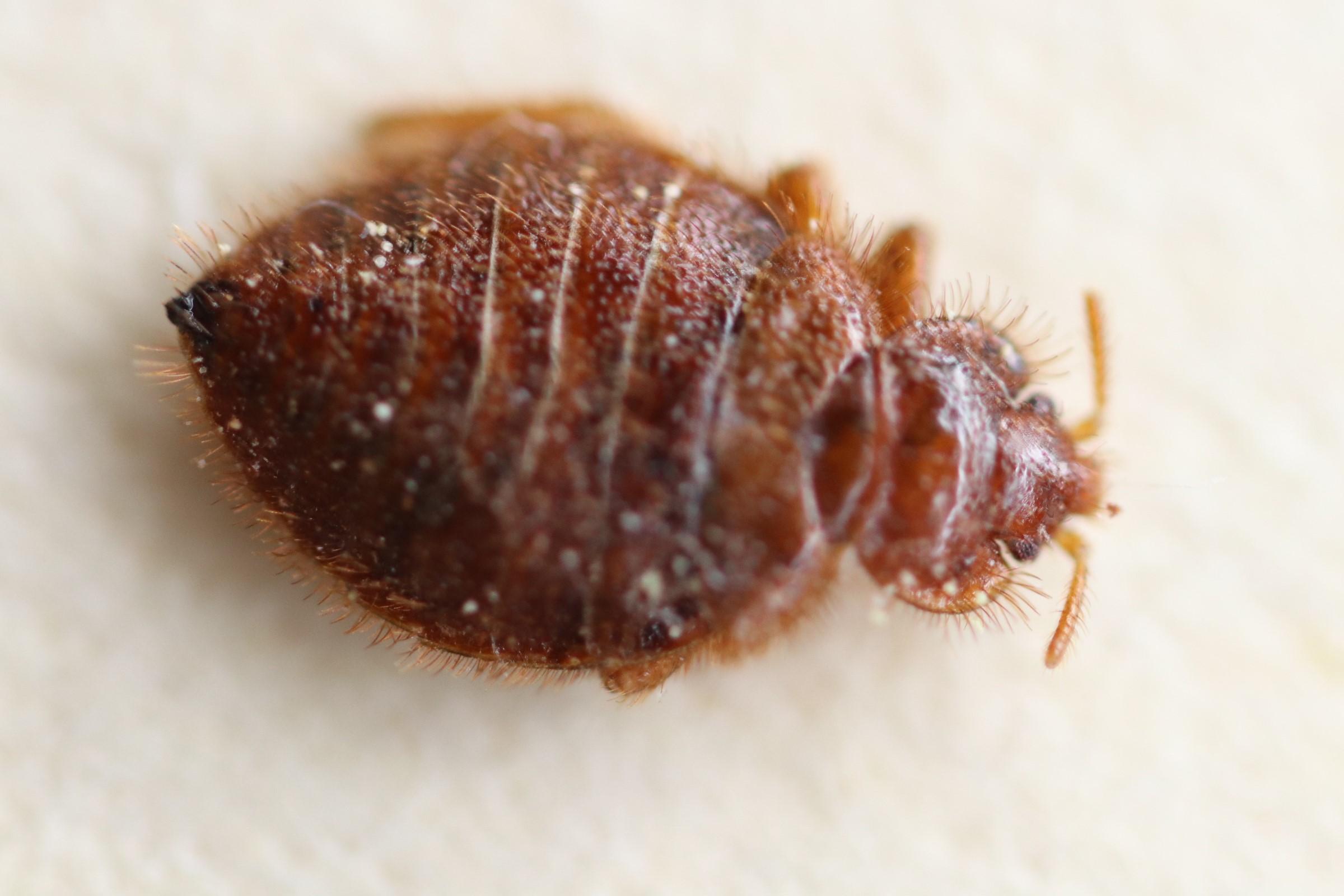 NC Pest Control image 7