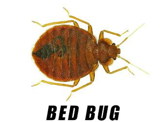 Rosenbloom Pest Control, Inc. image 8