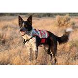 Gooddog Dog Training