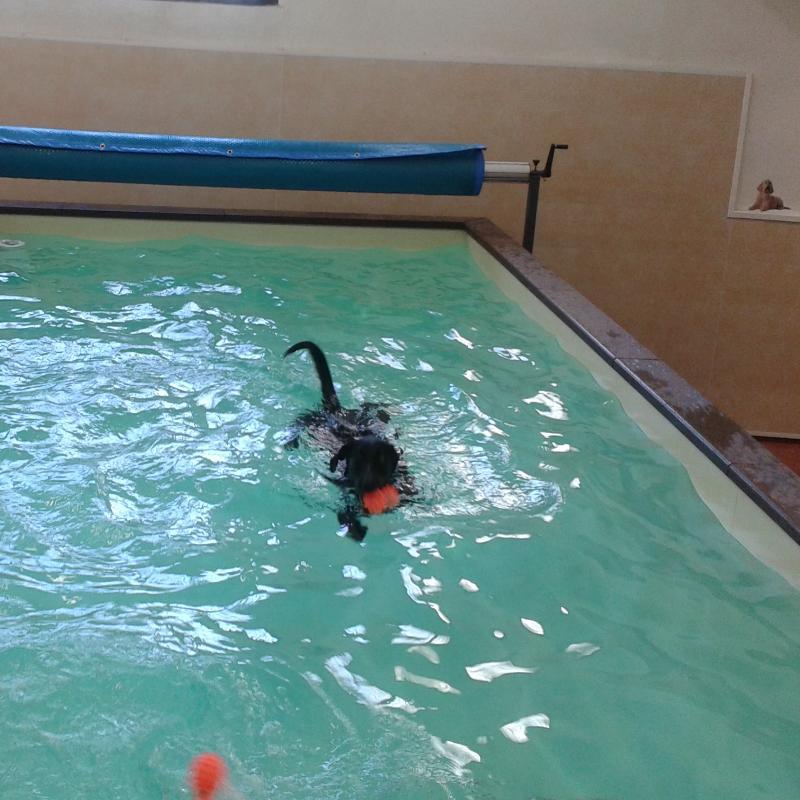 Swimming Dogs Piscina Per Cani Animali Materiali E