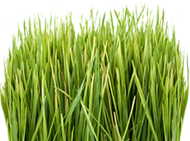 Lawn Doctor image 2