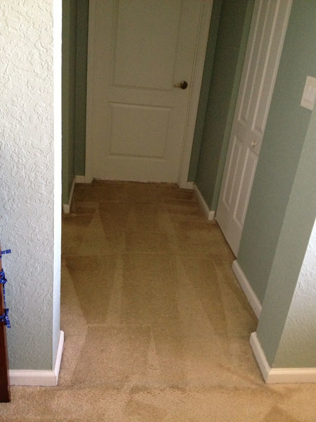NYC Carpet Cleaning image 8