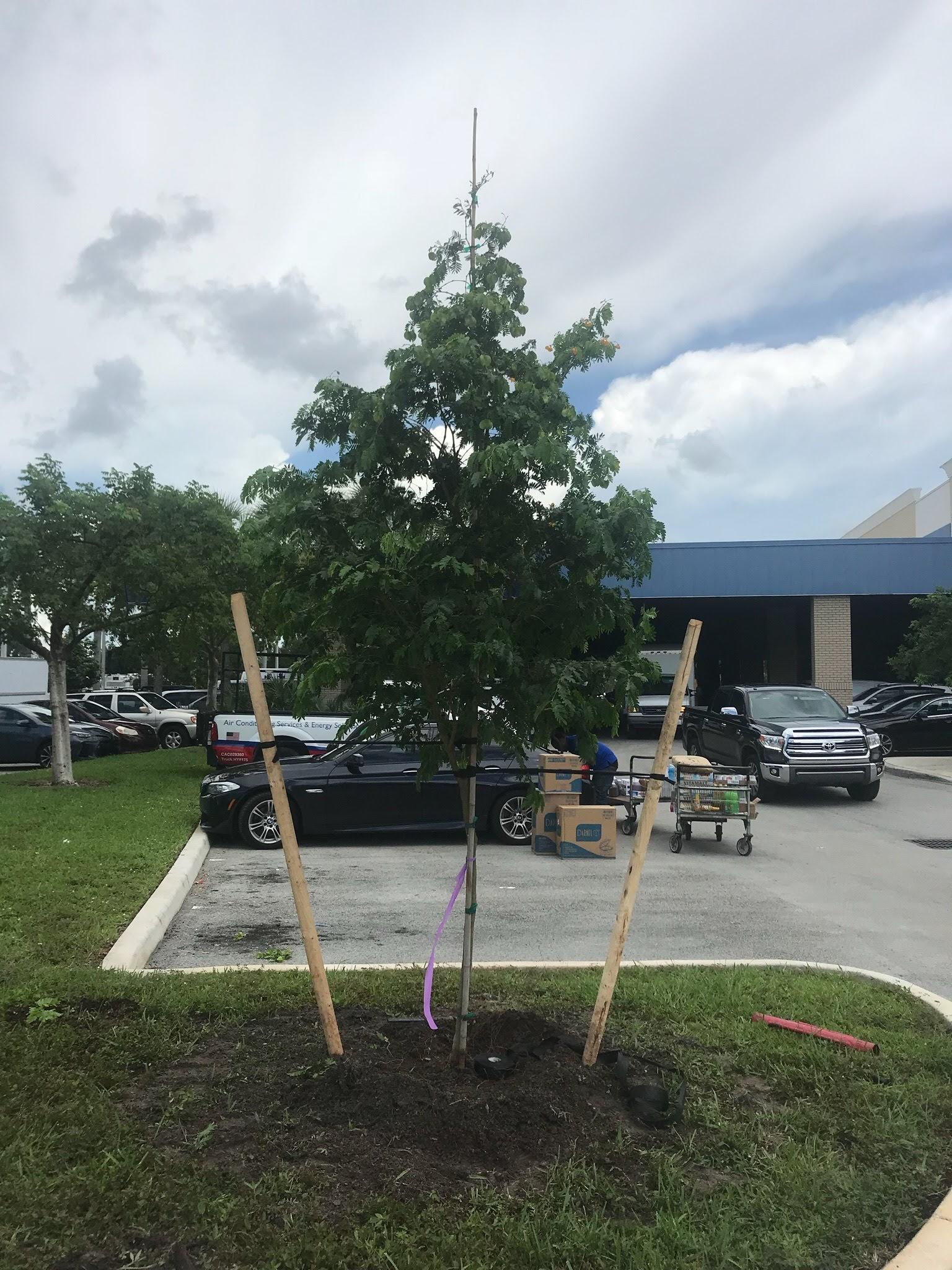 Jireh Tree Care image 3