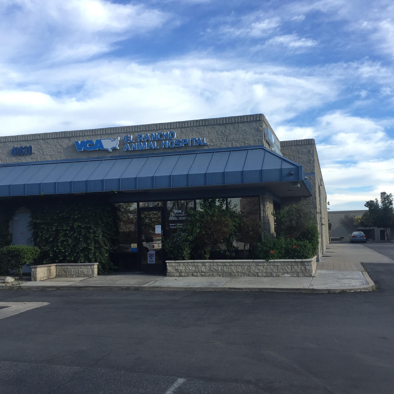 VCA El Rancho Animal Hospital image 1