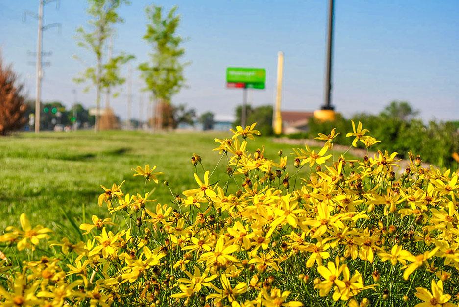 GAS Lawn Pros LLC image 9