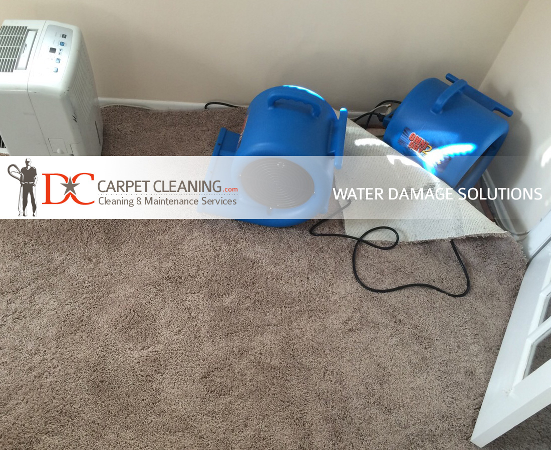 DC Carpet Cleaning image 15