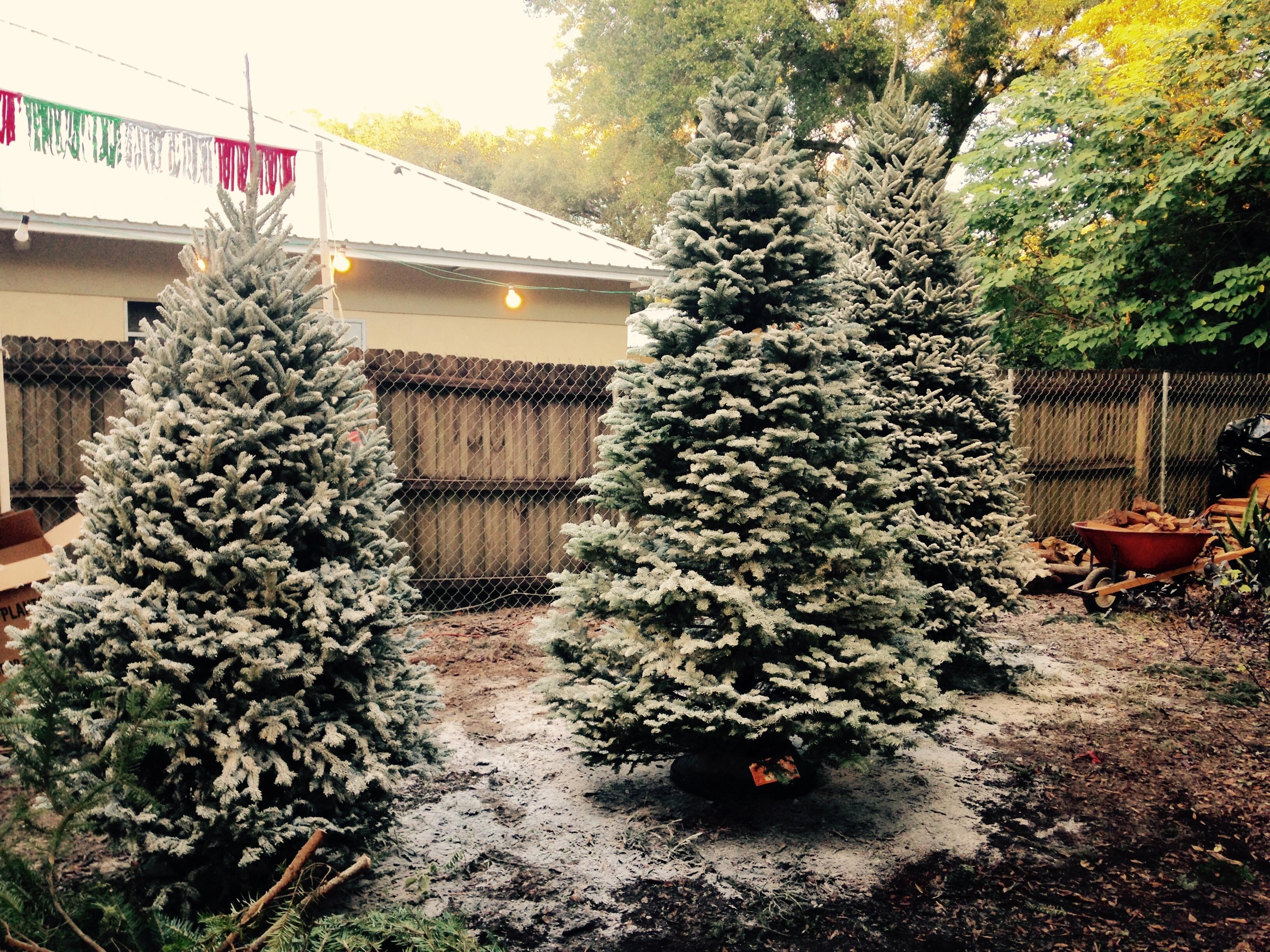 Dave's Christmas Tree Lot image 19