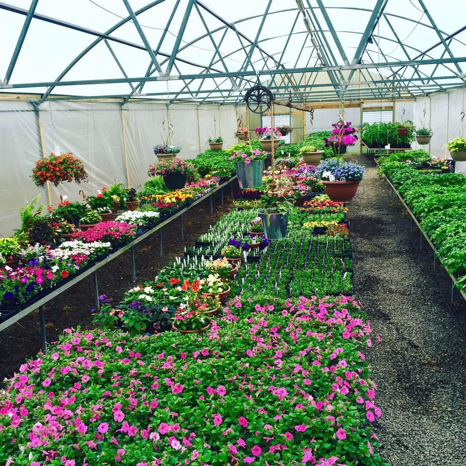 BP Nursery and Landscape image 0