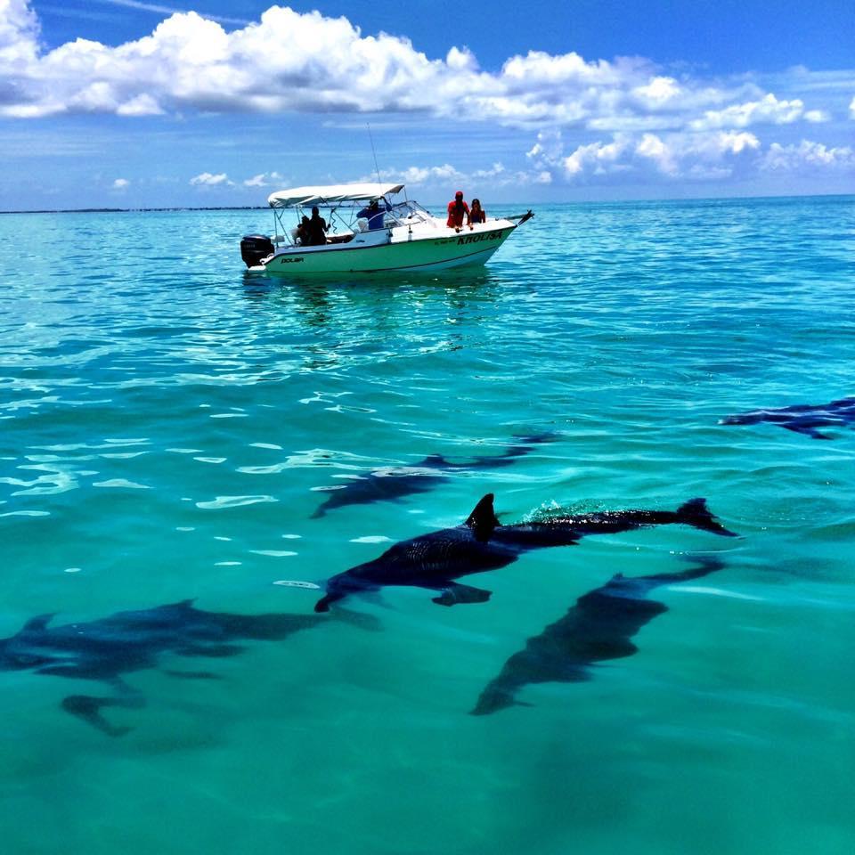 Dolphin Safari Charters Inc image 0