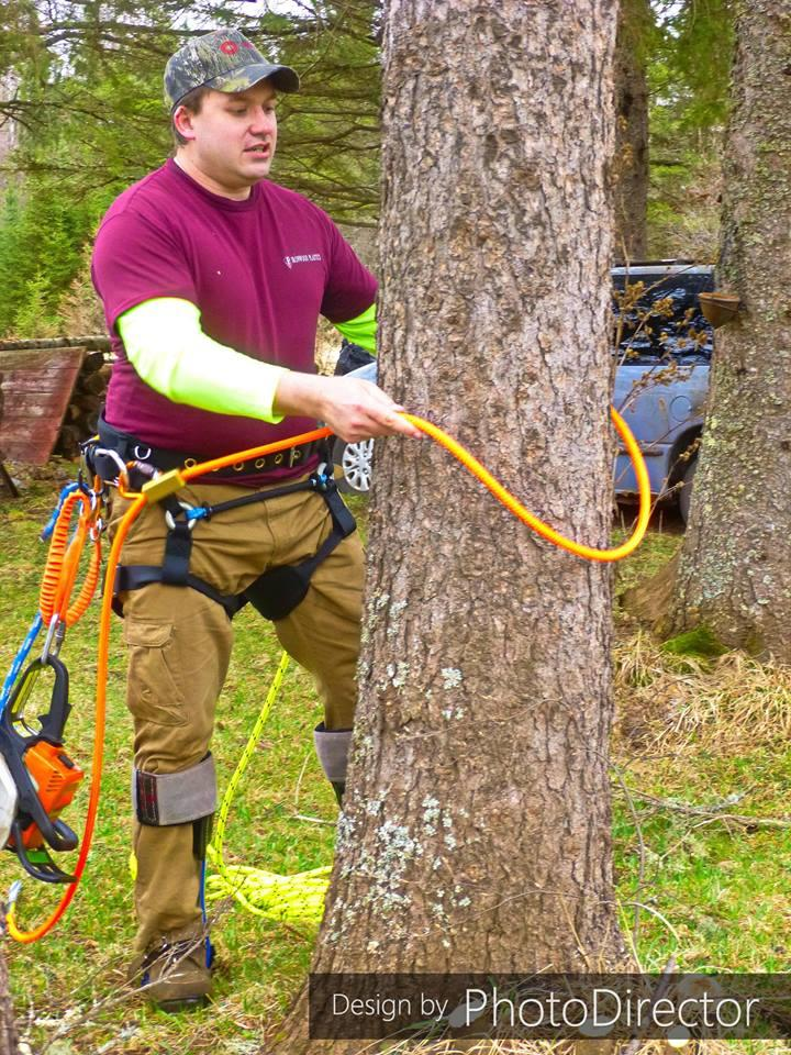 Joe's Tree Service image 2