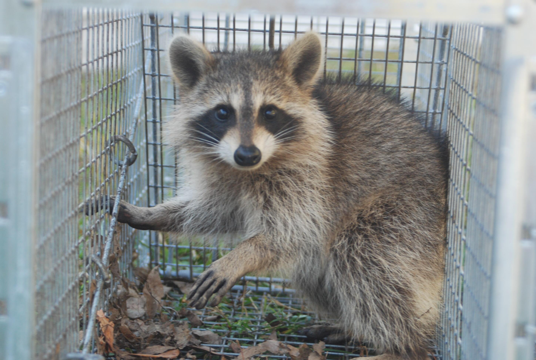 TriStar Wildlife LLC image 2