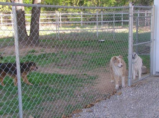Groomer Girls Pet Resort, Inc. in Ardmore, OK, photo #5