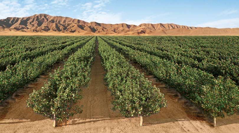 Avila Acres Country Gourmet image 2