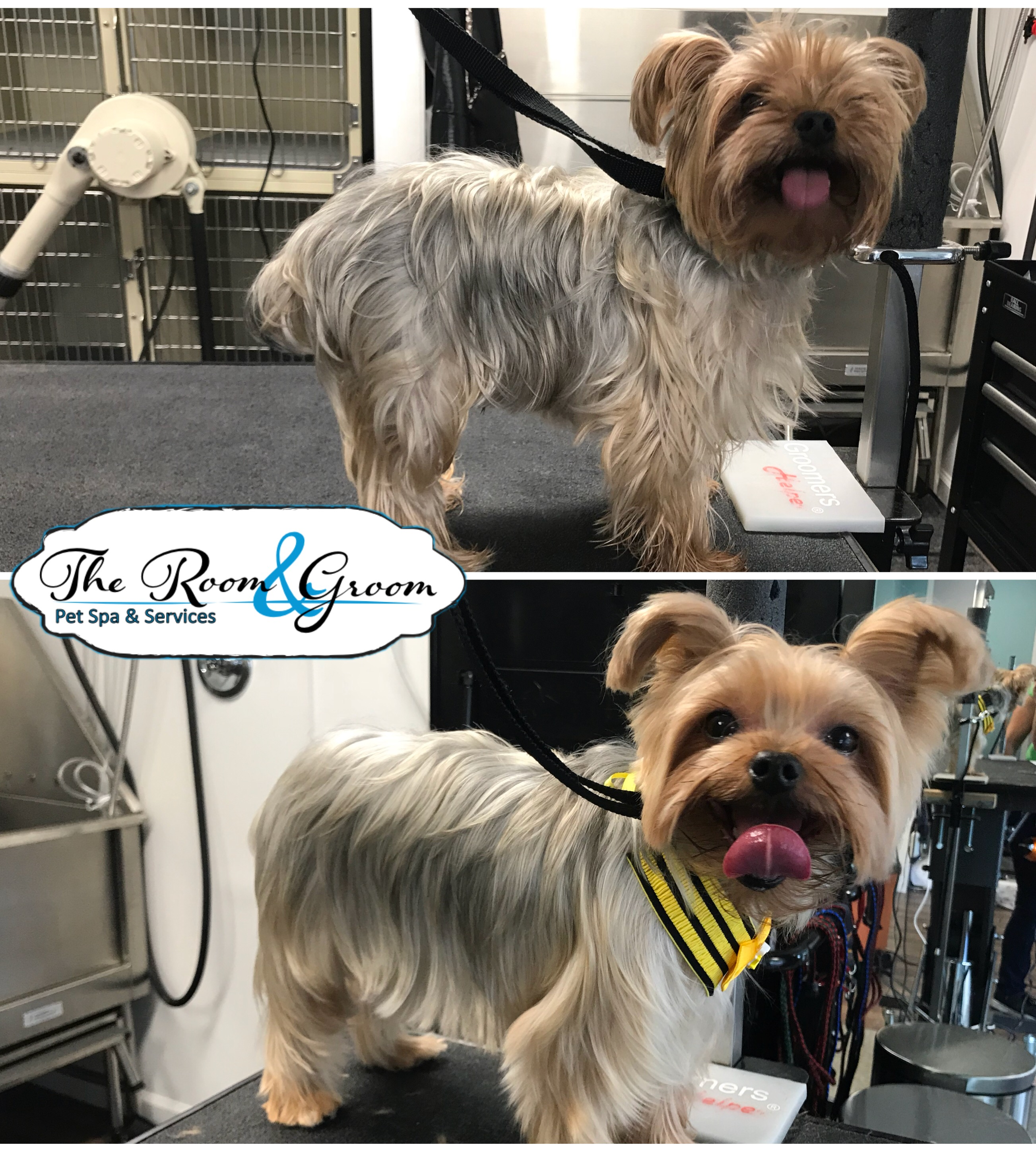 The Room & Groom, Pet Spa & Services image 83