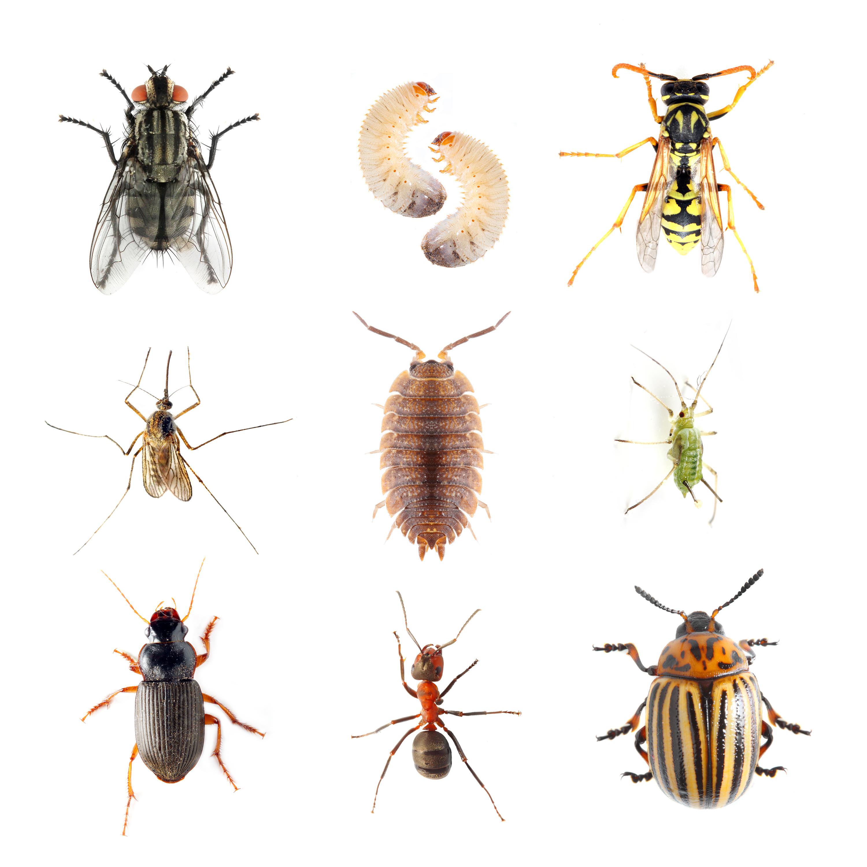 Pursuit Pest Control image 2