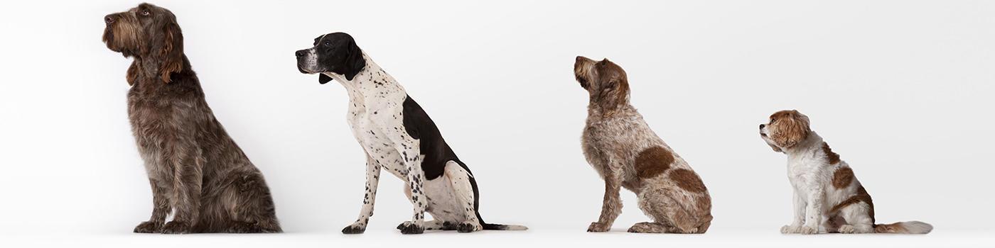 John Paul Pet Salon image 0
