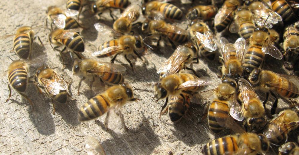 Combat Termite Specialist image 1