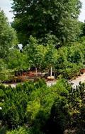 Snavely's Garden Corner image 6