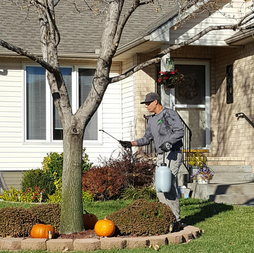 Complete Tree Care & Landscaping image 3