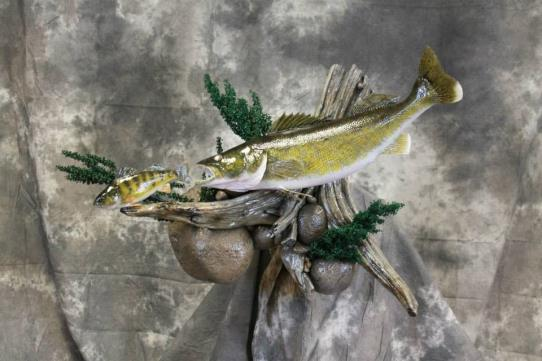 Dave's School Of Taxidermy image 7