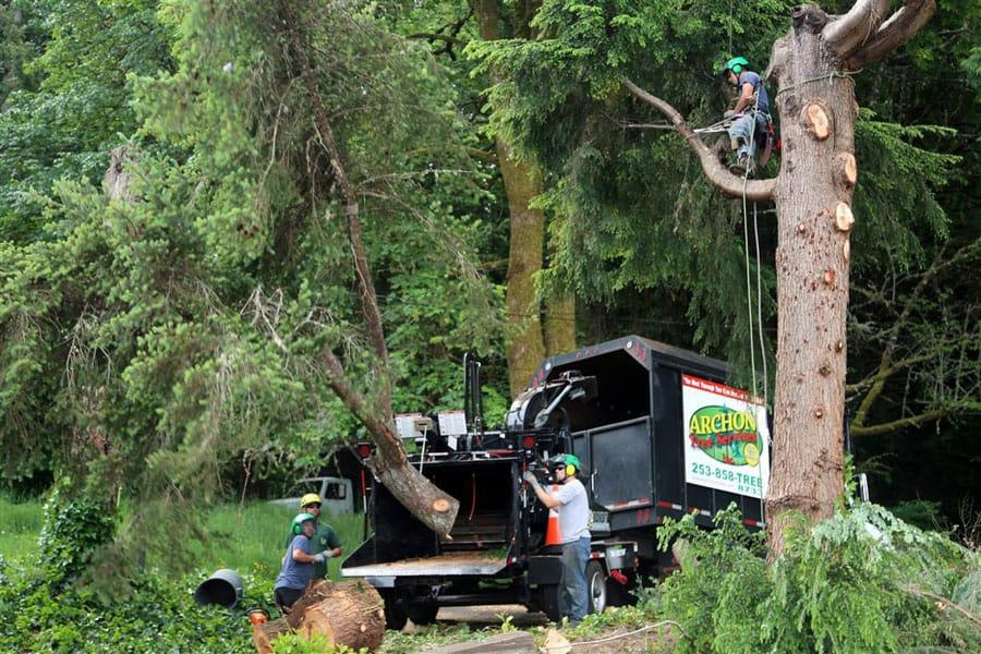 Archon Tree Services, Inc. image 1