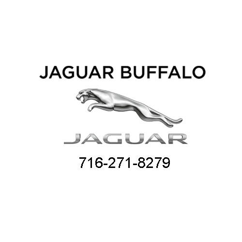 Jaguar Buffalo