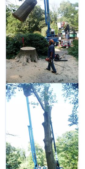 Amoroso Tree Service Inc image 1