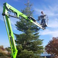 Morgan Tree Service image 5