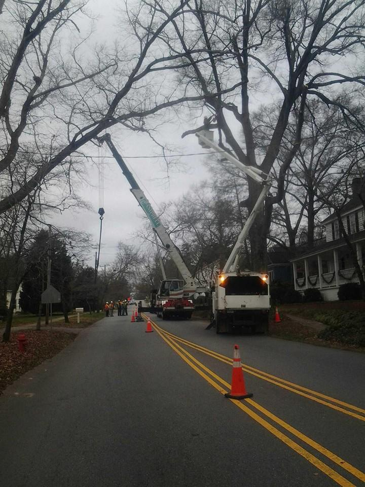 Franklin Tree Service image 1