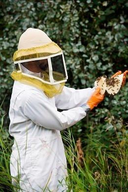 Little Giant Beekeepers image 1
